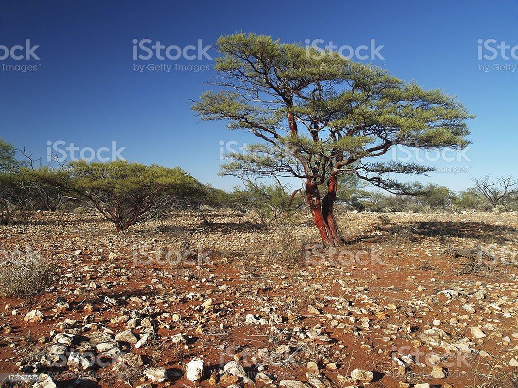 Morning Sun on Outback Bushland royalty-free stock photo