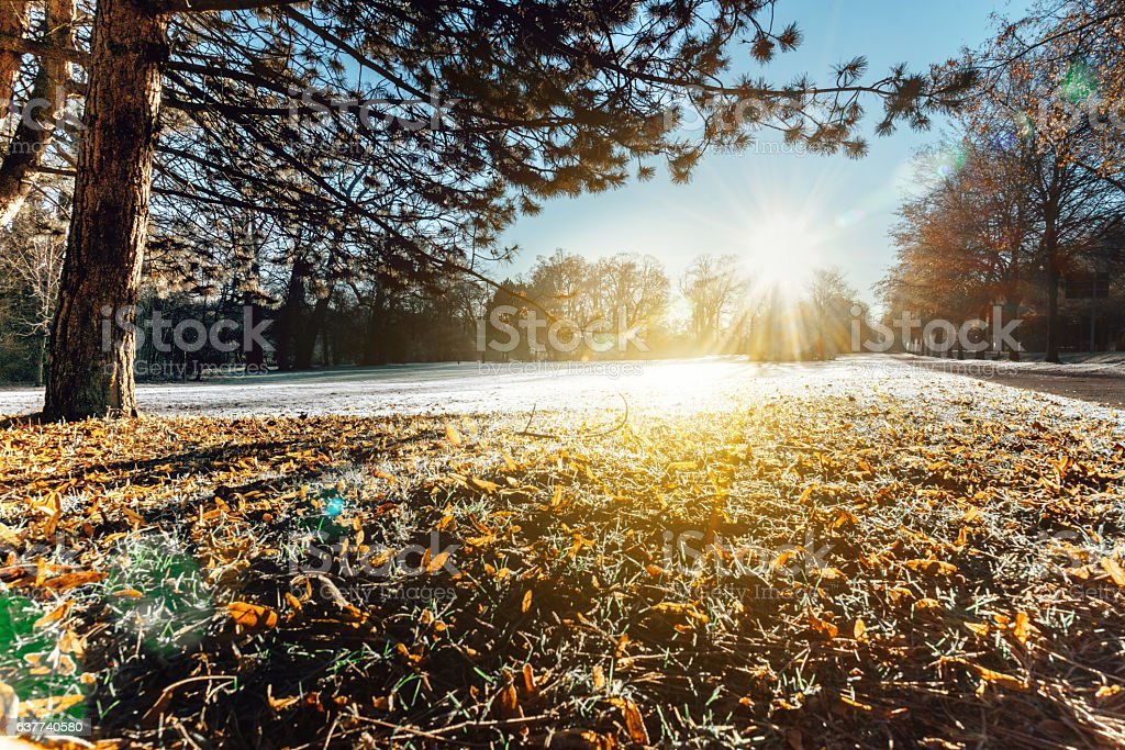 morning sun over meadow in Weimar Ilmpark with hoar frost stock photo
