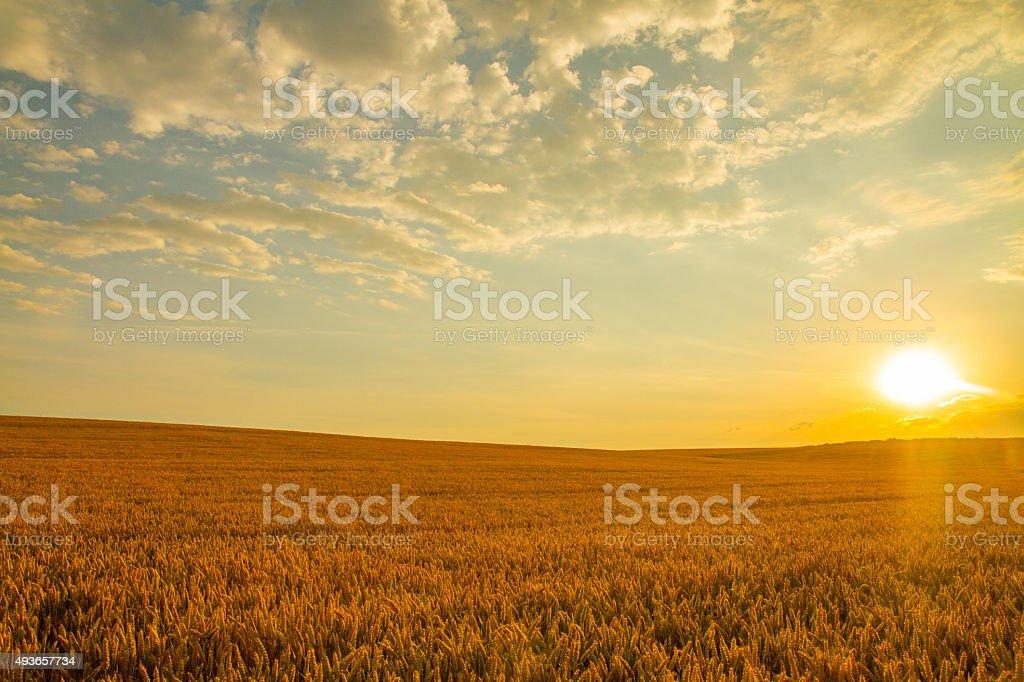 Morning Sun Over Wheat Field stock photo
