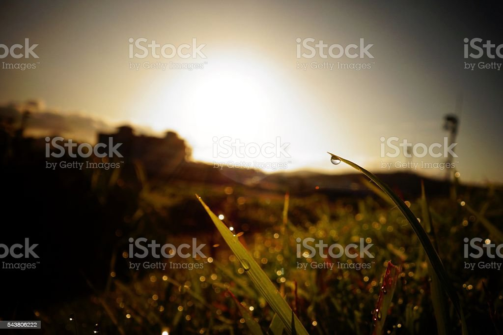 Morning Sun royalty-free stock photo