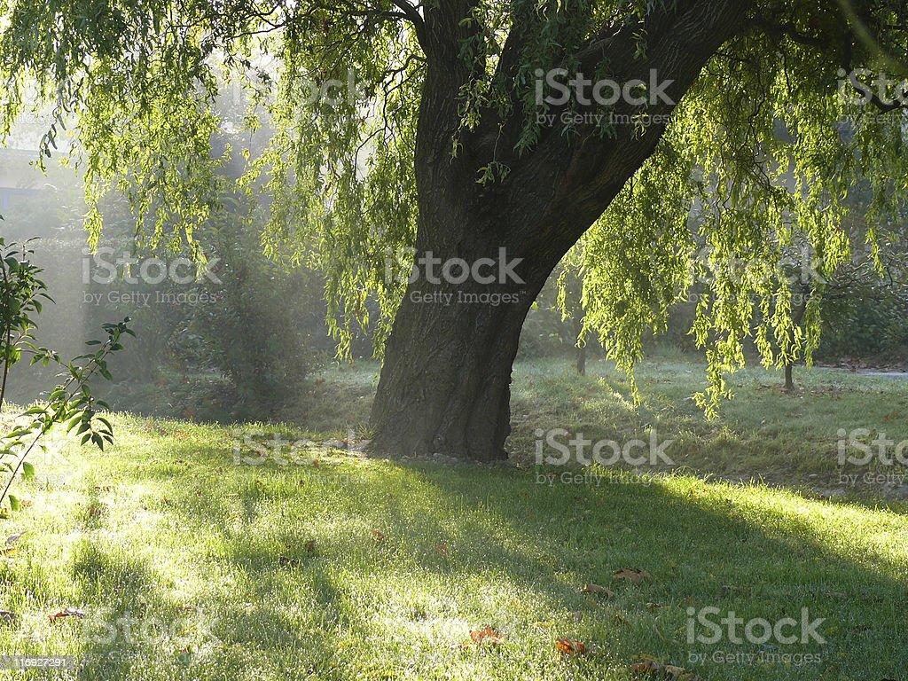 Morning Sun Rays royalty-free stock photo