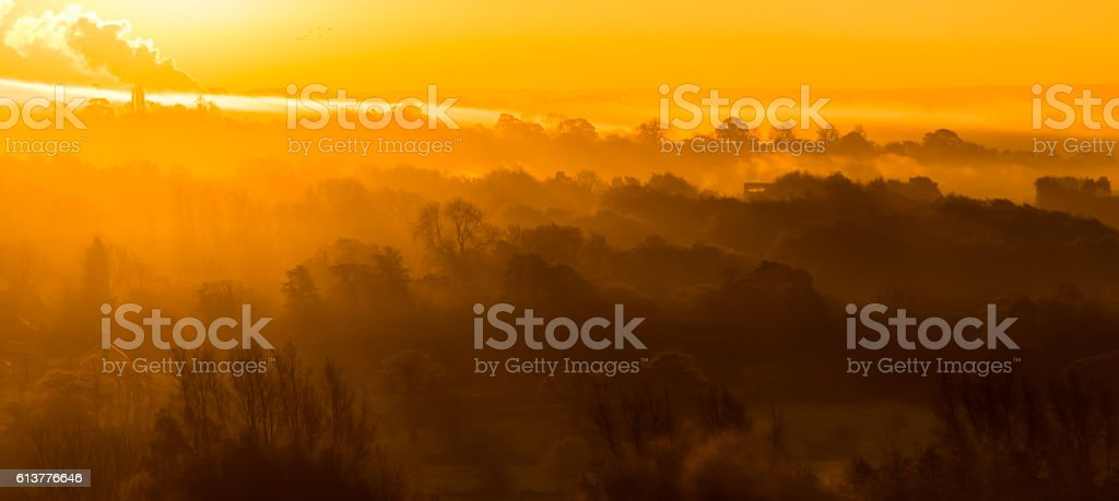 Morning sun rays through misty woods stock photo