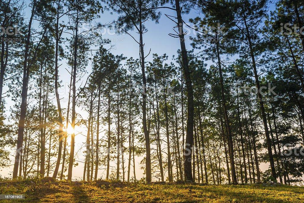 Morning Sun Shining through the Blooming Tree stock photo