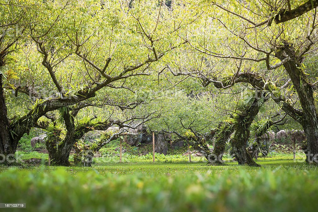 Morning Sun Shining through the Blooming Tree royalty-free stock photo