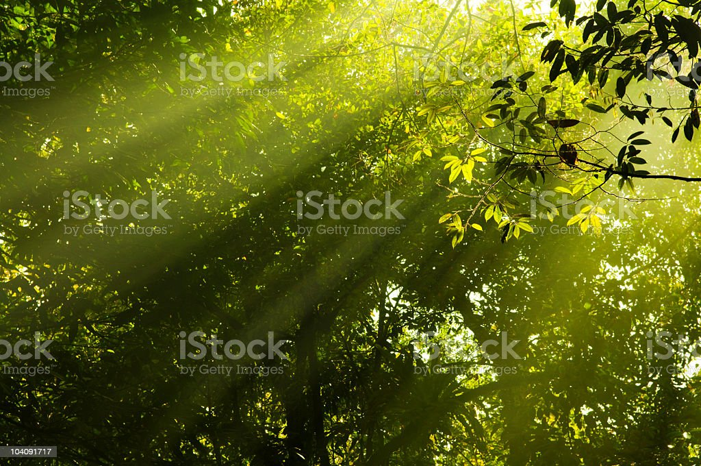 morning sunbeam royalty-free stock photo