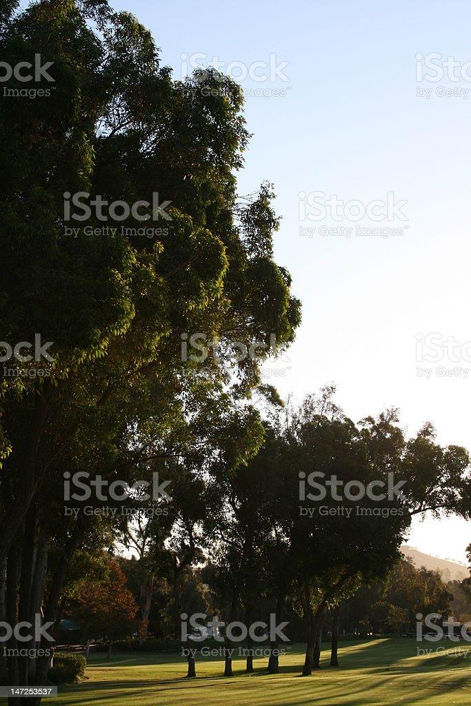 Rano Światło słoneczne zbiór zdjęć royalty-free