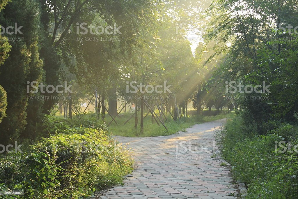 Morning sunlight royalty-free stock photo