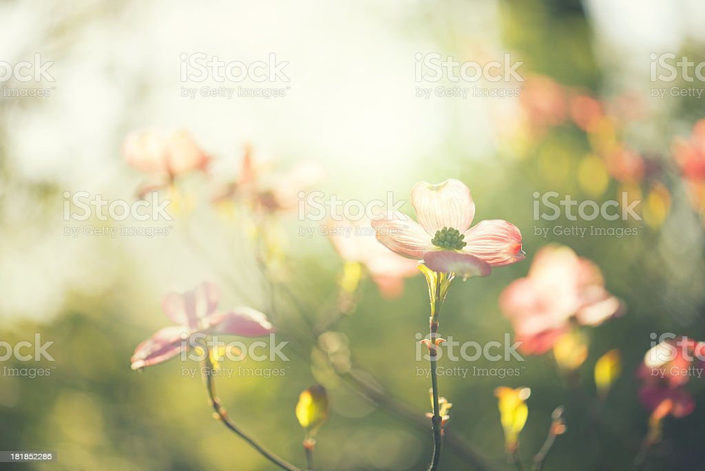 Morning sunrise in the garden royalty-free stock photo