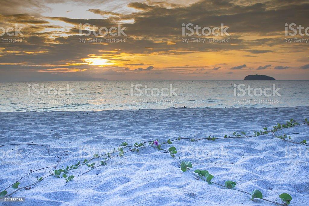 Утро закат и зеленые воды Трава на белом песчаном пляже Стоковые фото Стоковая фотография