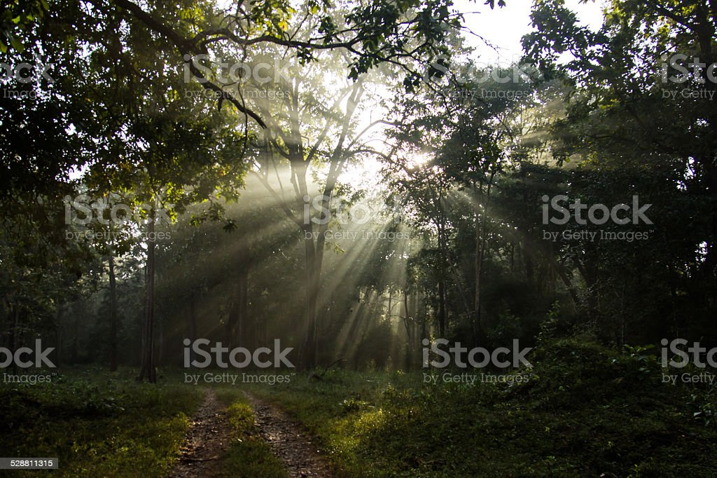Morning Sunshine stock photo