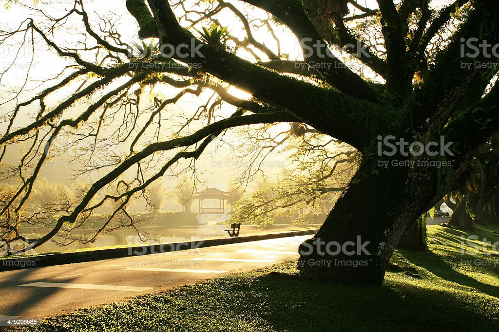 Morning Taiping Lake Garden stock photo