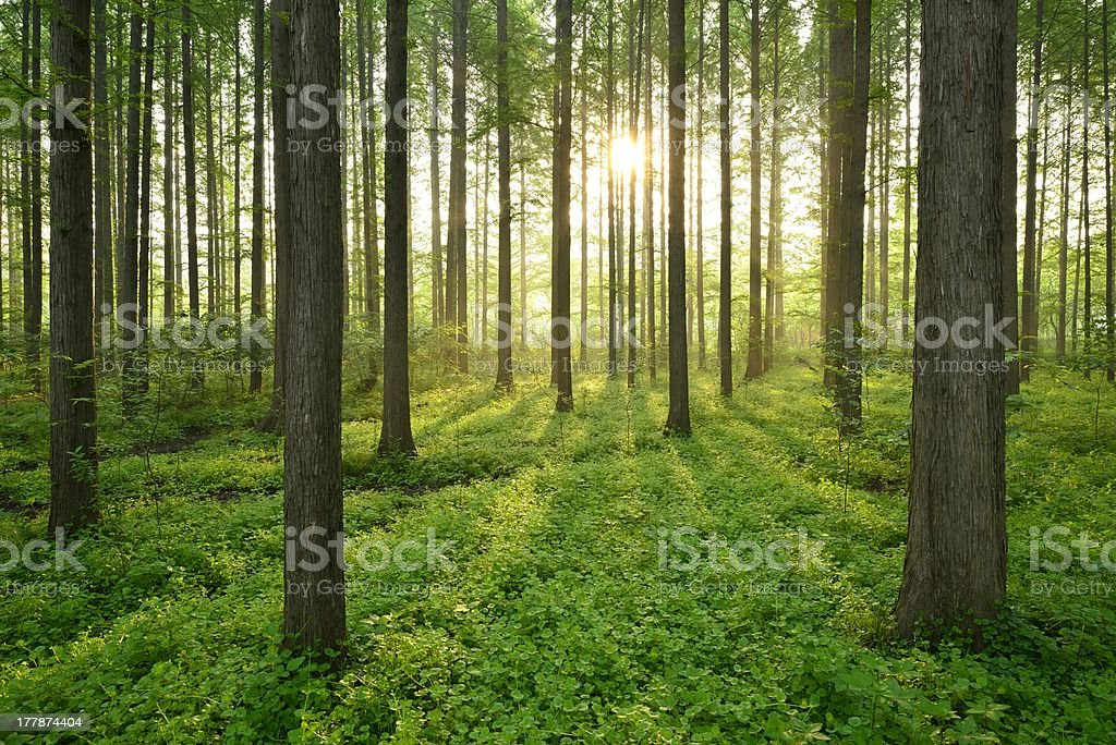 Morning, the beautiful forest scenery stock photo