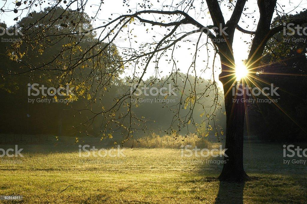 Morning through the Walnut Tree royalty-free stock photo