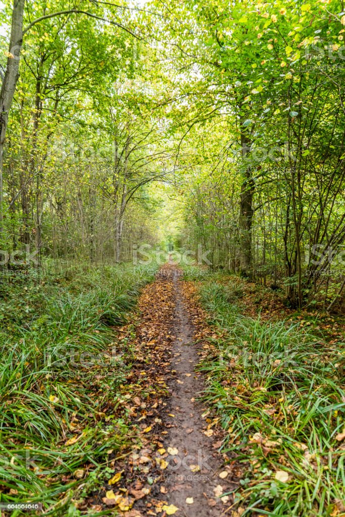 Morning view of empty forest path in autumn stock photo
