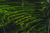 Morning View of Rice Terrace During the Sunrise