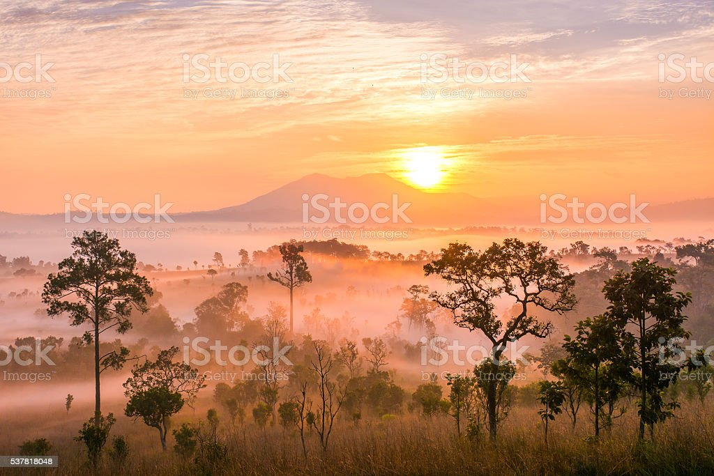 Morning with mist stock photo