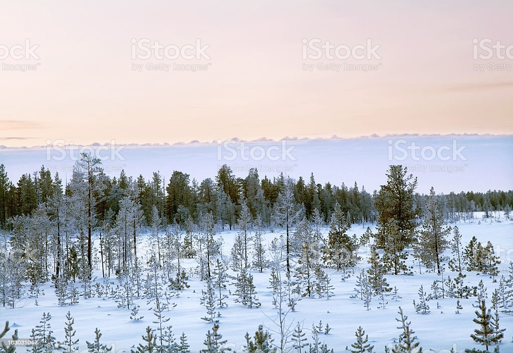 Morning.Winter landscape. royalty-free stock photo