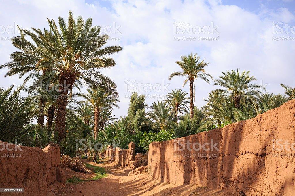 Moroccan oasis stock photo