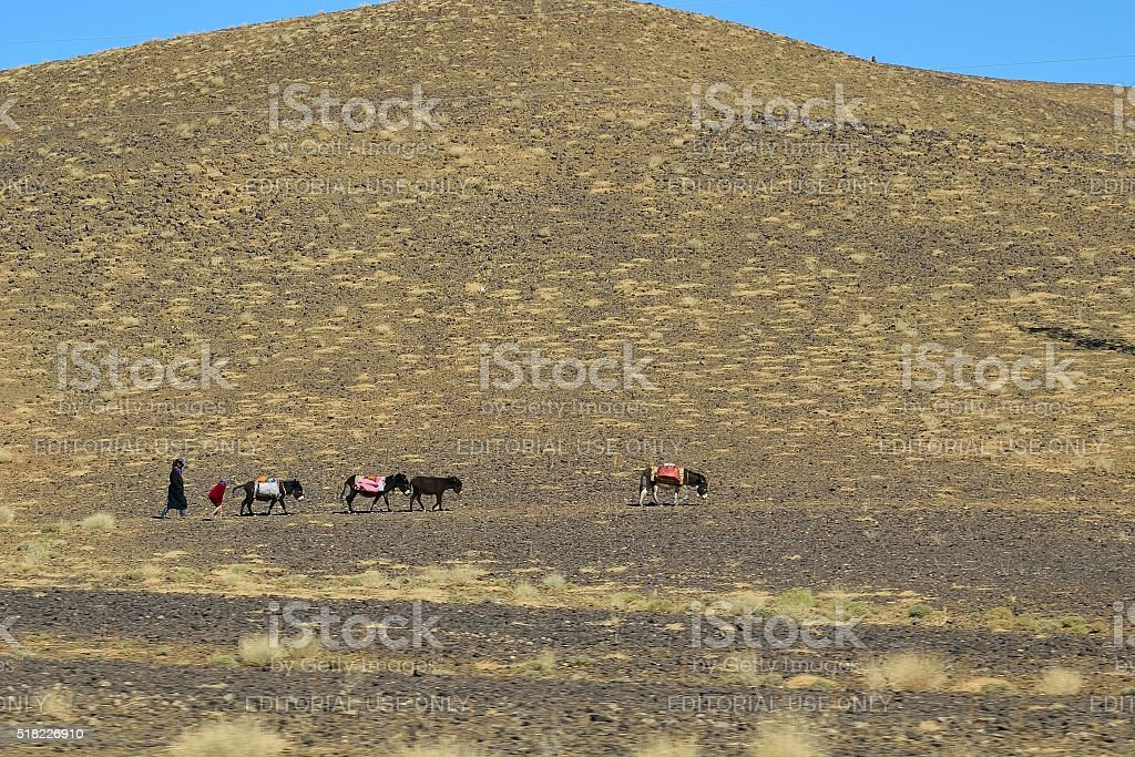 Moroccan Women Folowing Mule Train in Desert stock photo