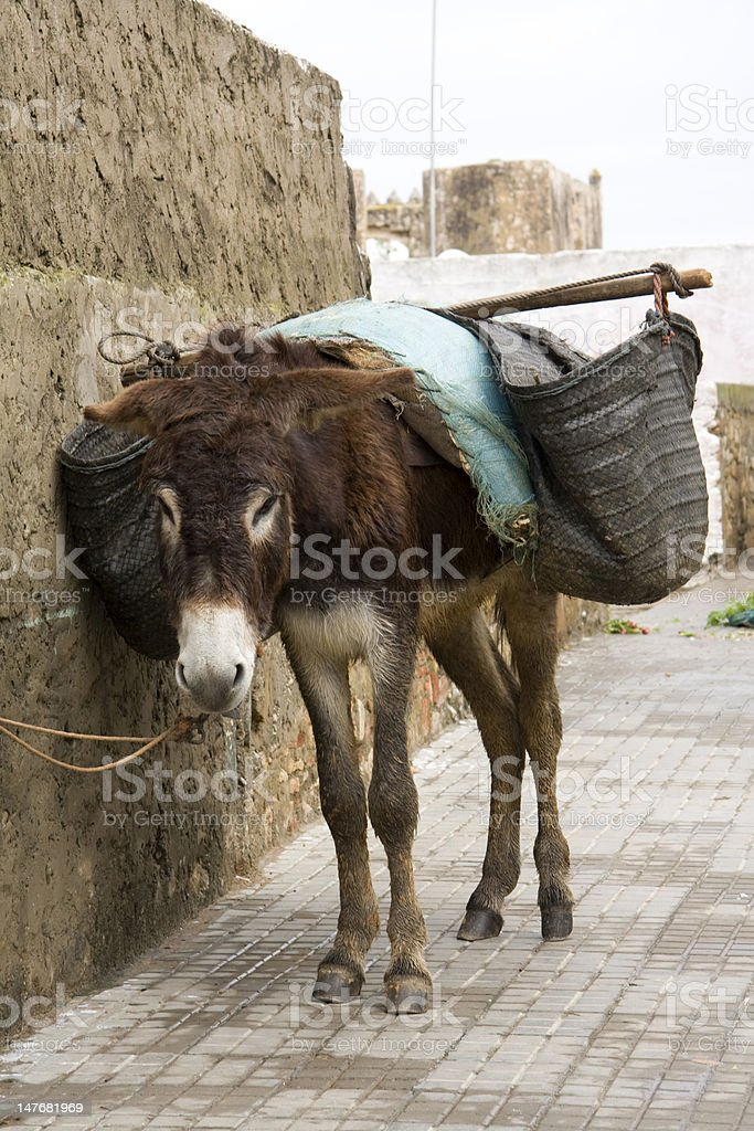 Morocco Donkey royalty-free stock photo