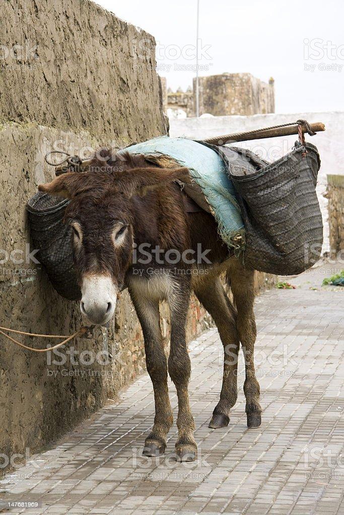 Morocco Donkey stock photo