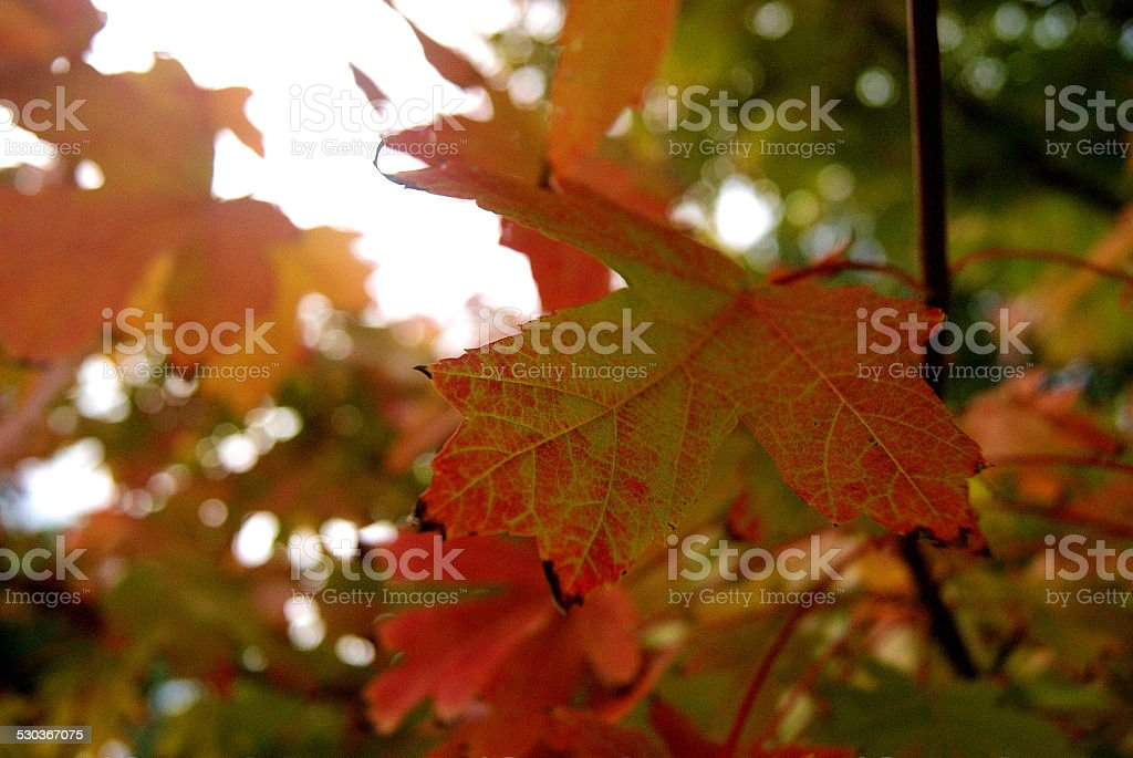 Morphing Fall royalty-free stock photo