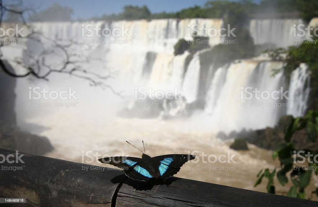 Morpho Butterfly At Iguacu Falls royalty-free stock photo