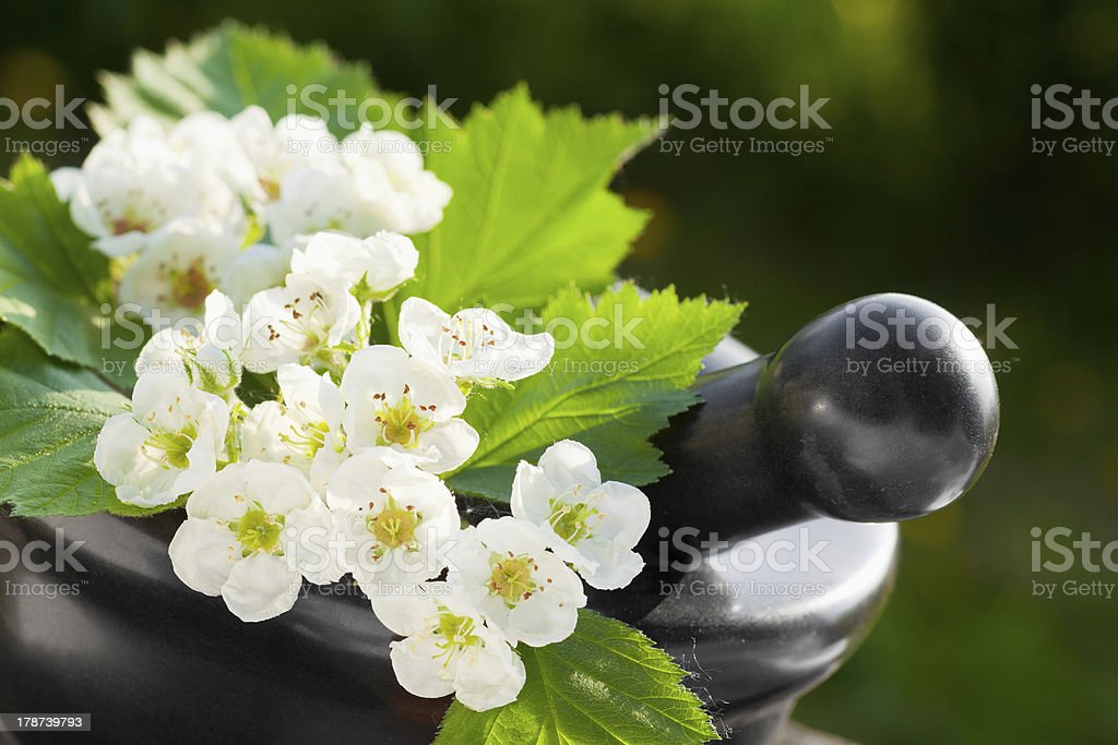 mortar with blossom hawthorn stock photo