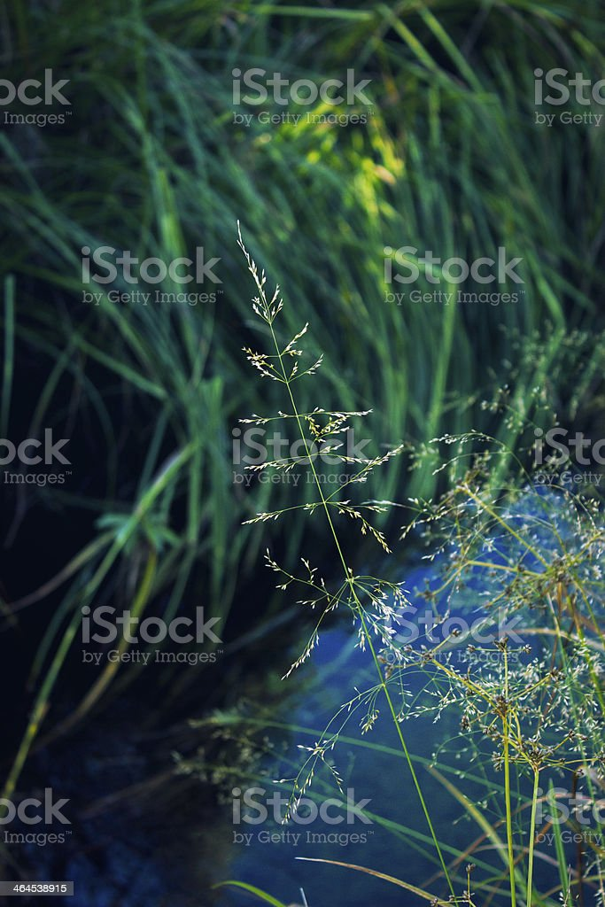 Mosaic flower rests over a pond stock photo