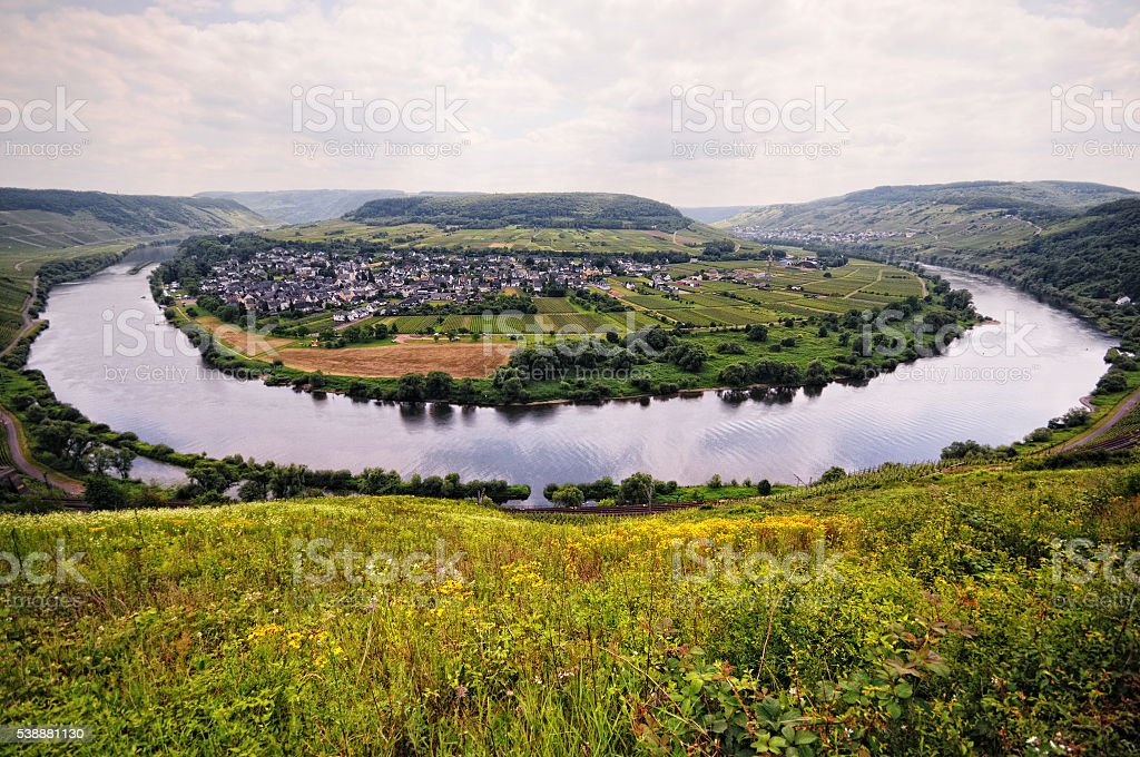Mosel river loop at Puenderich village. vineyards stock photo