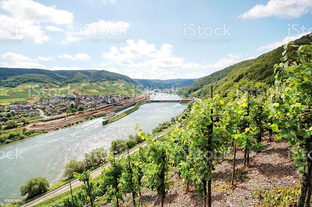 Mosel River vineyard with villages Fankel. stock photo