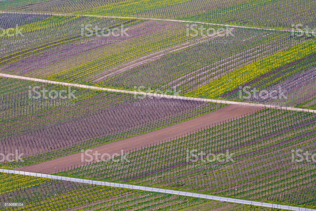 Mosel valley vineyard background stock photo