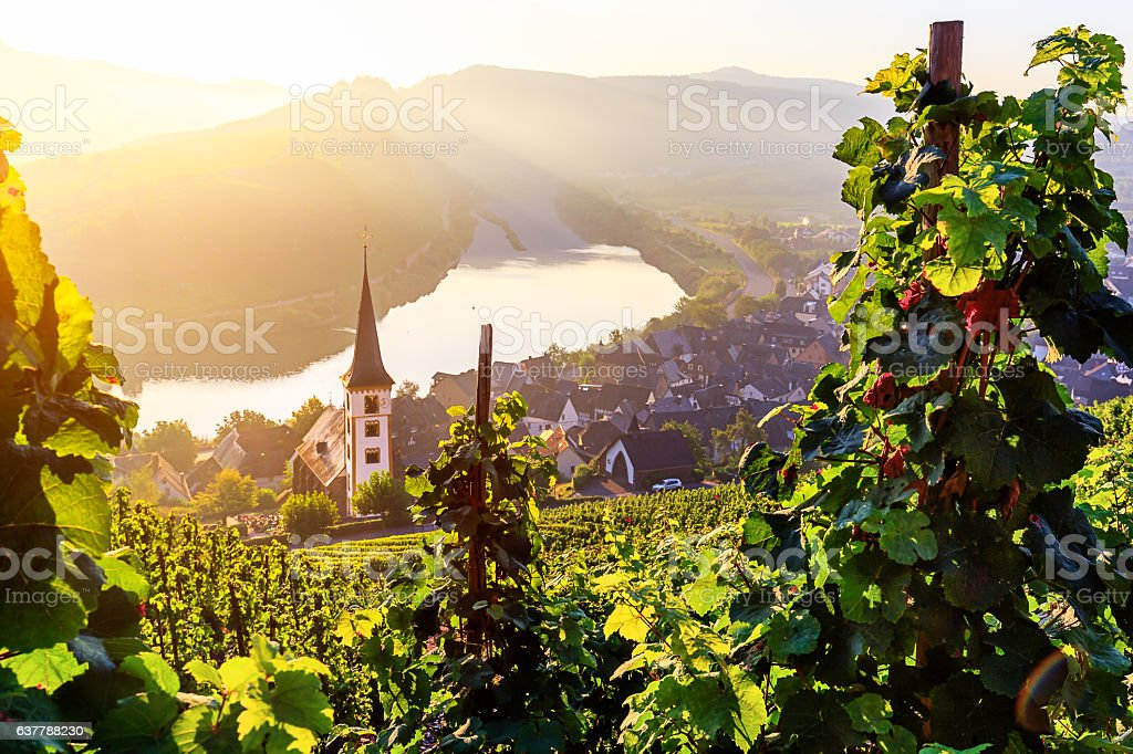 Moselschleife Bremm stock photo