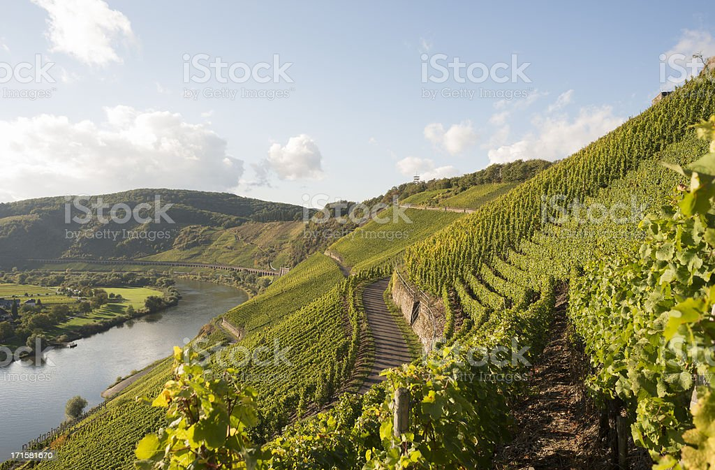 Mosel, Moselle Valley, Marienburg, Puenderich, Zell, Germany stock photo