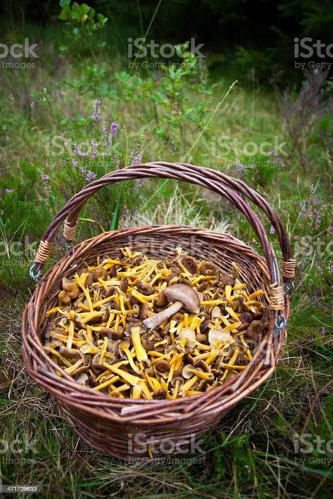 Moshroom dinner! stock photo