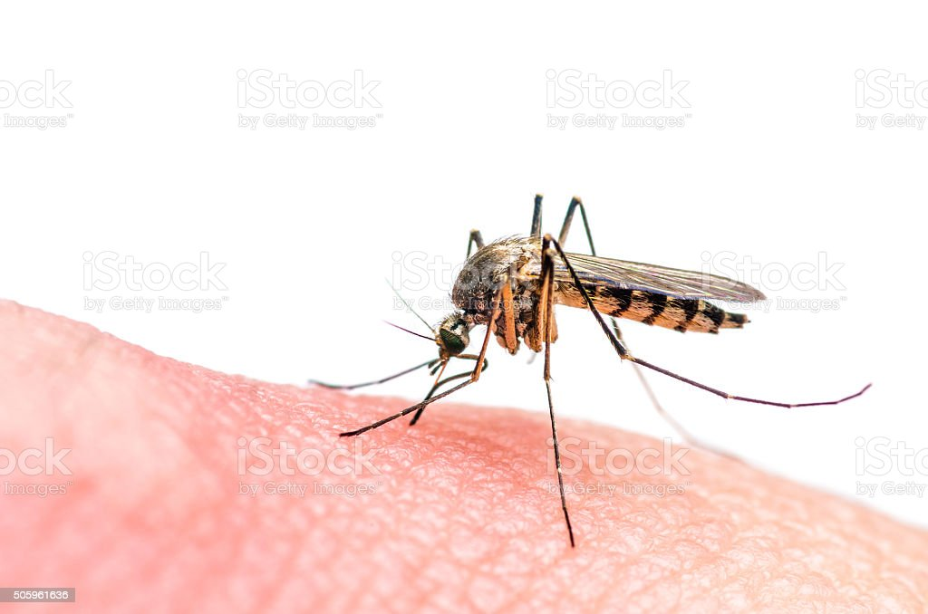 Mosquito bite isolated on white stock photo