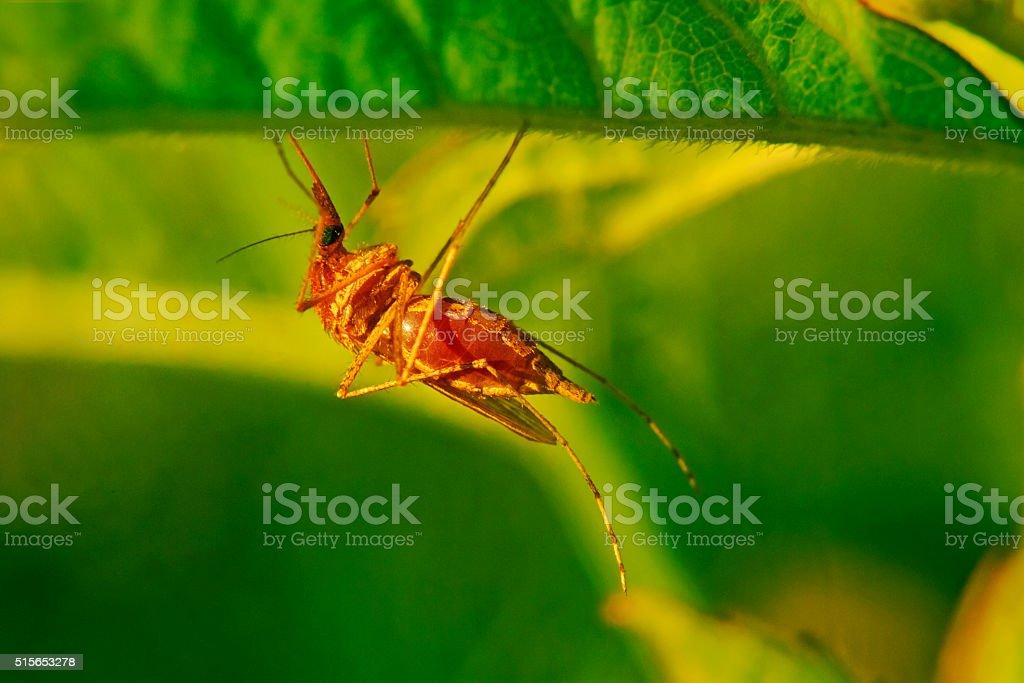 Mosquito bloodsucker, on the grass stock photo