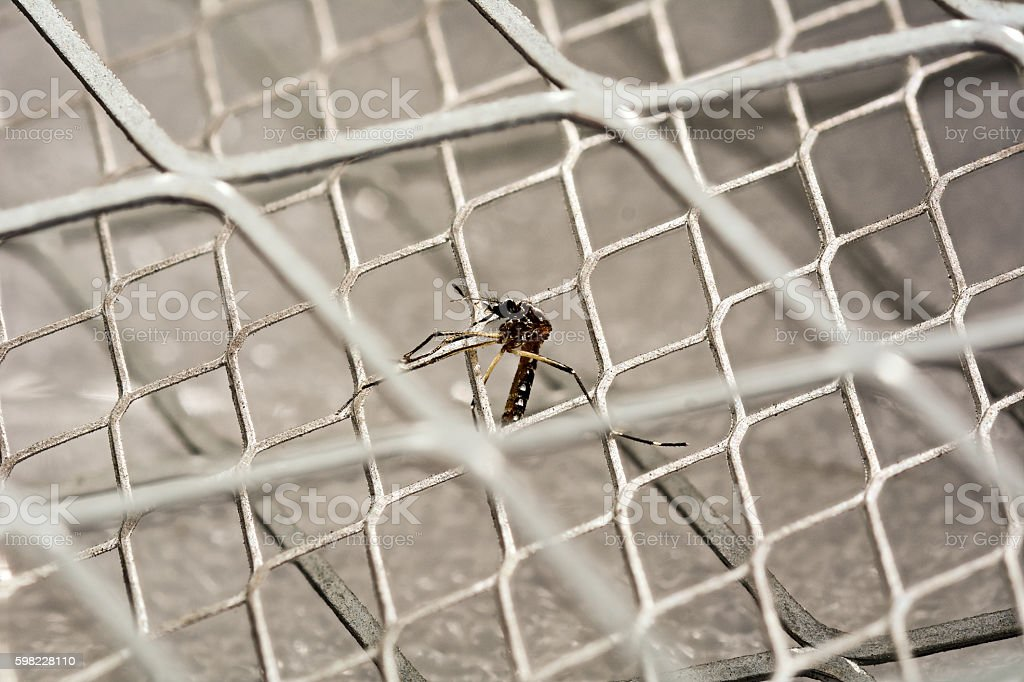 mosquito dead on electric mosquito swatter stock photo