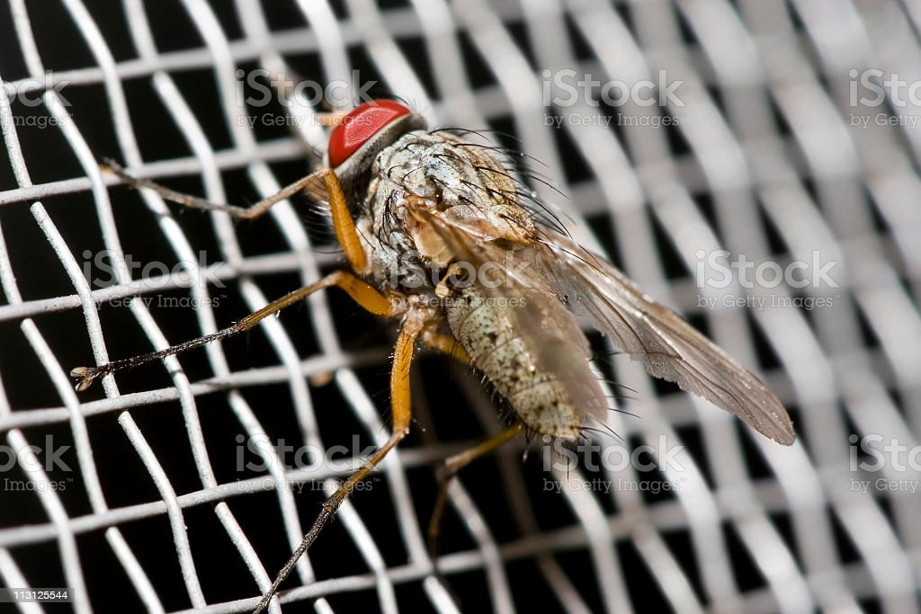 Mosquito Net with fly (Macro) stock photo