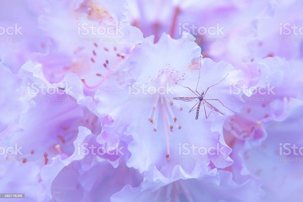 Mosquito on flower stock photo
