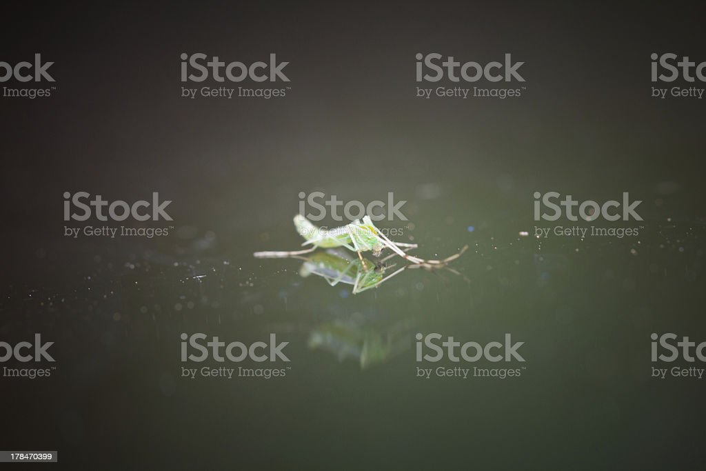 mosquito on glass royalty-free stock photo