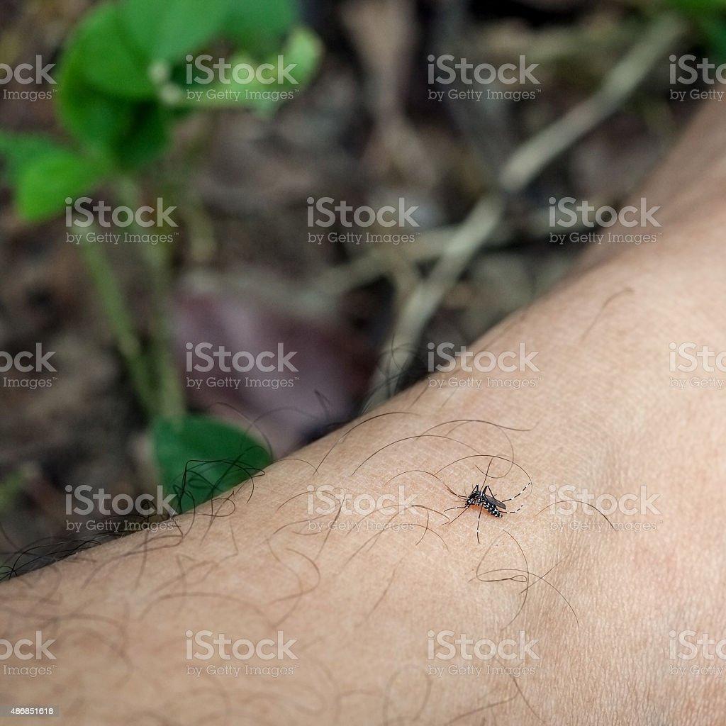 mosquito on leg men ,in the wild. stock photo