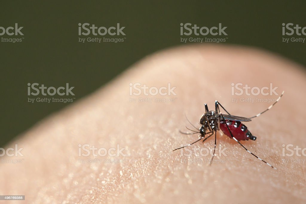 Mosquito sucking blood on a human hand stock photo