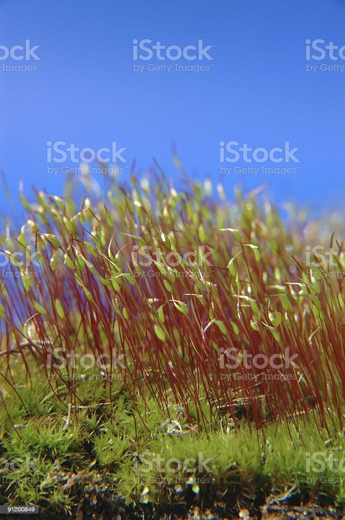 Зеленый и синий Стоковые фото Стоковая фотография