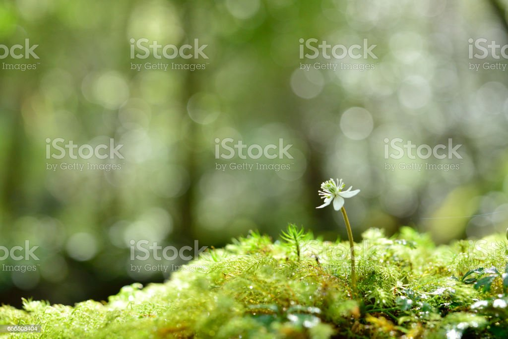 Moss and flowers close up stock photo