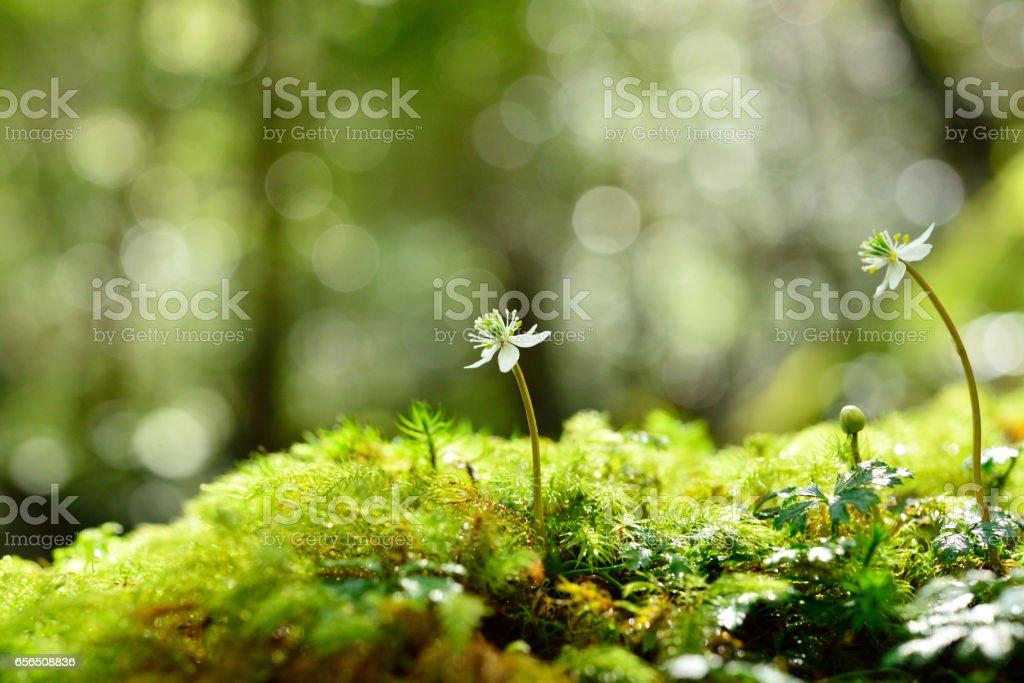 Moss and flowers macro stock photo