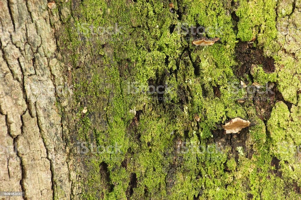 Moss and Fungi Tree royalty-free stock photo