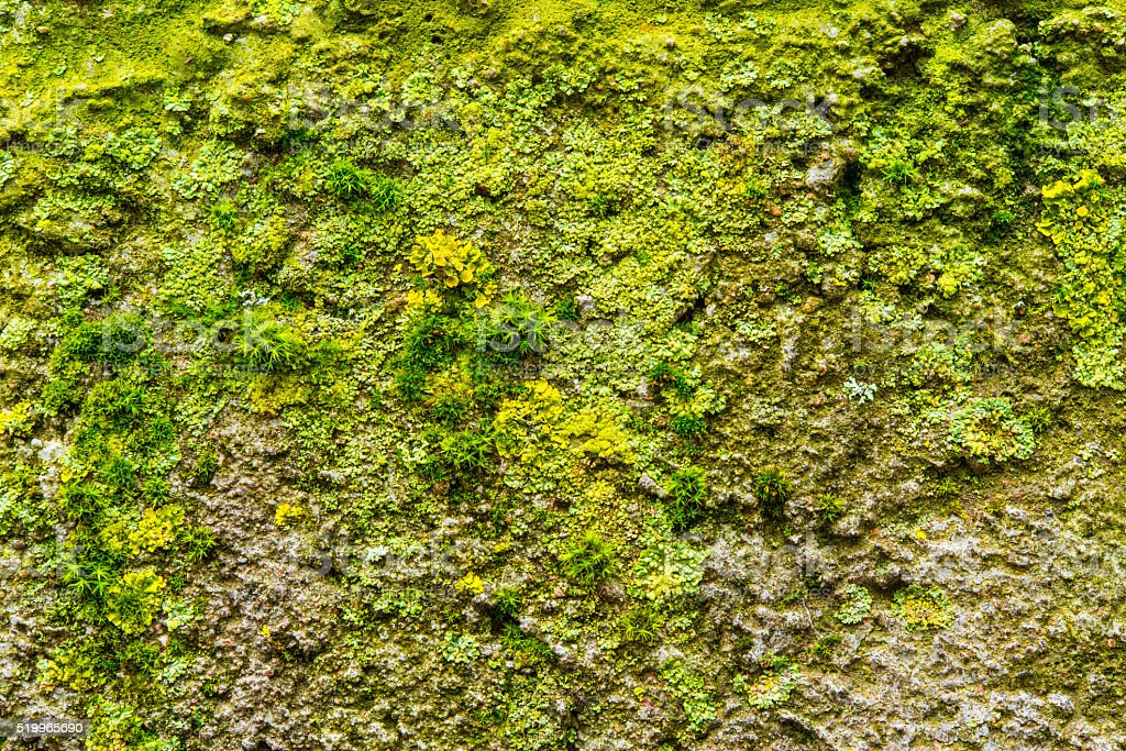 Moss and lichen close up stock photo