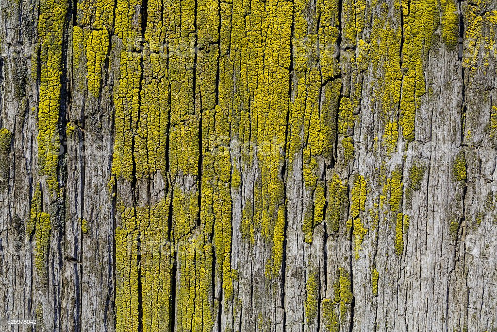 Moss and mold affect a wood board stock photo