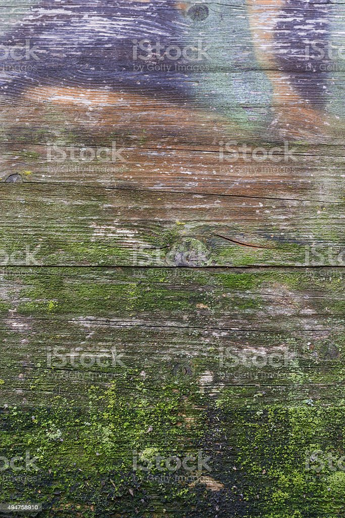 Moss and mold stock photo